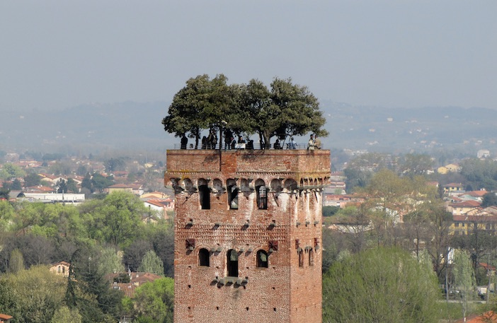 Guinigi-Tower-Lucca.jpg